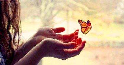 surrender_butterfly