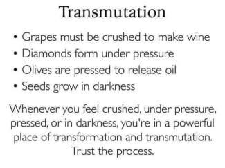 DG transmutation